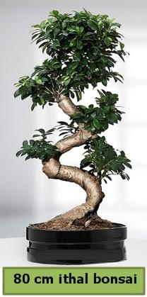 80 cm özel saksıda bonsai bitkisi  Şanlıurfa çiçek mağazası , çiçekçi adresleri
