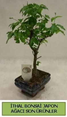 İthal bonsai japon ağacı bitkisi  Şanlıurfa internetten çiçek satışı