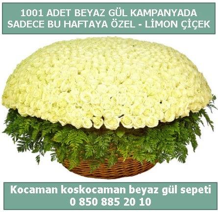 1001 adet beyaz gül sepeti özel kampanyada  Şanlıurfa hediye sevgilime hediye çiçek