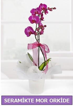 Seramik içerisinde birinci kalite tek dallı mor orkide  Şanlıurfa anneler günü çiçek yolla