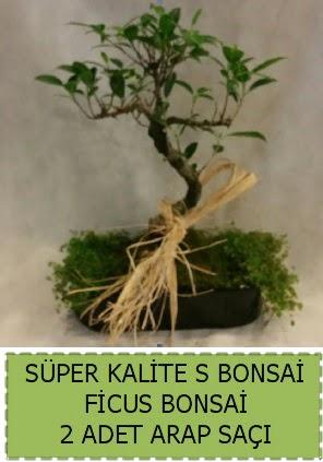 Ficus S Bonsai ve arap saçı  Şanlıurfa çiçek mağazası , çiçekçi adresleri