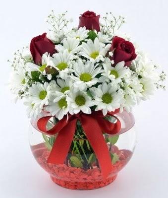 Fanusta 3 Gül ve Papatya  Şanlıurfa çiçek gönderme sitemiz güvenlidir