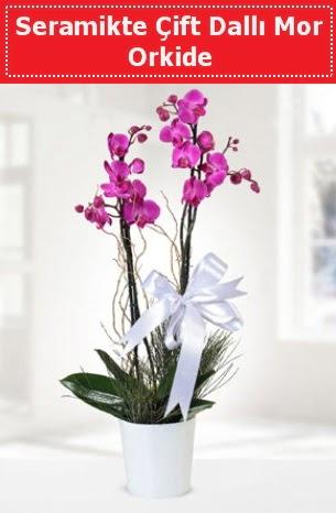 Seramikte Çift Dallı Mor Orkide  Şanlıurfa çiçek siparişi sitesi