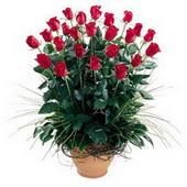 Şanlıurfa hediye çiçek yolla  10 adet kirmizi gül cam yada mika vazo