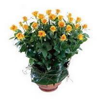 Şanlıurfa ucuz çiçek gönder  10 adet sari gül tanzim cam yada mika vazoda çiçek