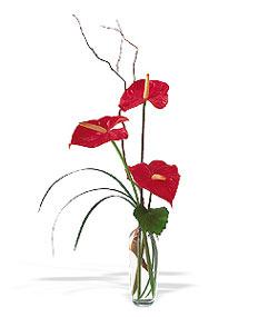 Şanlıurfa İnternetten çiçek siparişi  cam yada mika Vazoda 3 adet  antoryum