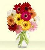 Şanlıurfa 14 şubat sevgililer günü çiçek  cam yada mika vazoda 15 özel gerbera