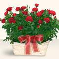 Şanlıurfa anneler günü çiçek yolla  11 adet kirmizi gül sepette