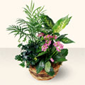 Şanlıurfa kaliteli taze ve ucuz çiçekler  5 adet canli çiçek sepette