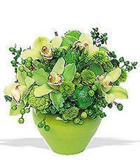 cam yada mika vazoda 5 adet orkide   Şanlıurfa uluslararası çiçek gönderme