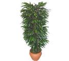 Şanlıurfa İnternetten çiçek siparişi  Özel Mango 1,75 cm yüksekliginde