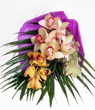 Şanlıurfa ucuz çiçek gönder  1 adet dal orkide buket halinde sunulmakta