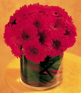 Şanlıurfa yurtiçi ve yurtdışı çiçek siparişi  23 adet gerbera çiçegi sade ve sik cam içerisinde