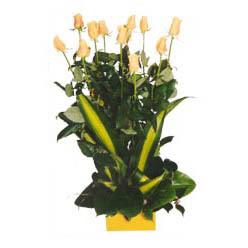 12 adet beyaz gül aranjmani  Şanlıurfa online çiçek gönderme sipariş