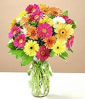 Şanlıurfa çiçekçiler  17 adet karisik gerbera