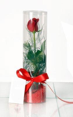 Şanlıurfa çiçek online çiçek siparişi  Silindir vazoda tek kirmizi gül
