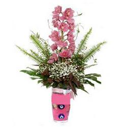 Şanlıurfa online çiçekçi , çiçek siparişi  cam yada mika vazo içerisinde tek dal orkide çiçegi