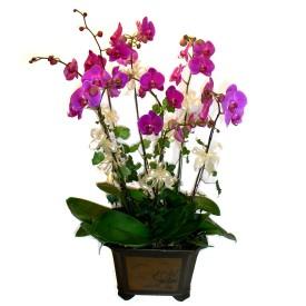 Şanlıurfa çiçek , çiçekçi , çiçekçilik  4 adet orkide çiçegi