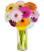 Şanlıurfa çiçek gönderme  Farkli renklerde 15 adet gerbera çiçegi