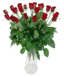 Şanlıurfa çiçek mağazası , çiçekçi adresleri  11 adet kimizi gülün ihtisami cam yada mika vazo modeli