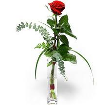 Şanlıurfa çiçekçi mağazası  Sana deger veriyorum bir adet gül cam yada mika vazoda