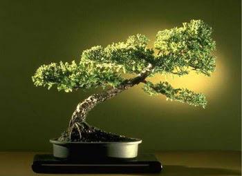 ithal bonsai saksi çiçegi  Şanlıurfa çiçek yolla , çiçek gönder , çiçekçi