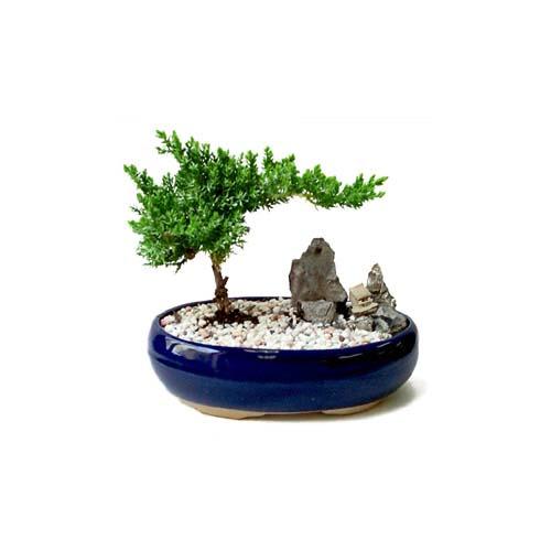 ithal bonsai saksi çiçegi  Şanlıurfa çiçek servisi , çiçekçi adresleri