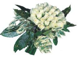 Şanlıurfa çiçek gönderme  9 Beyaz gül Özel kisiler için