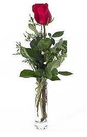 Vazo içerisinde 1 adet kirmizi gül  Şanlıurfa ucuz çiçek gönder