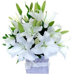 Şanlıurfa çiçek online çiçek siparişi  2 dal cazablanca vazo çiçeği