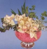 Şanlıurfa çiçek siparişi vermek  Dal orkide kalite bir hediye