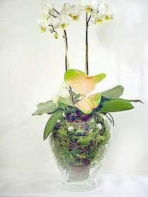 Şanlıurfa kaliteli taze ve ucuz çiçekler  Cam yada mika vazoda özel orkideler