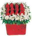 Şanlıurfa çiçek servisi , çiçekçi adresleri  Kare cam yada mika içinde kirmizi güller - anneler günü seçimi özel çiçek