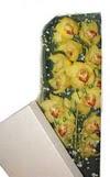 Şanlıurfa çiçek servisi , çiçekçi adresleri  Kutu içerisine dal cymbidium orkide