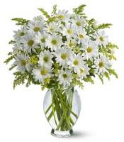 Vazo içerisinde beyaz krizantem çiçekleri  Şanlıurfa çiçek yolla , çiçek gönder , çiçekçi