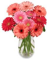 vazo içerisinde 13 adet gerbera çiçeği  Şanlıurfa İnternetten çiçek siparişi