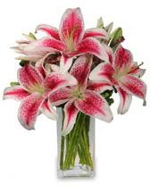 Vazo içerisinde 5 dal kazablanka çiçeği  Şanlıurfa ucuz çiçek gönder