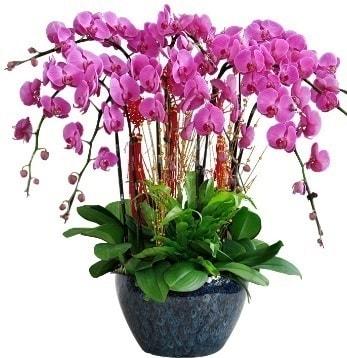 9 dallı mor orkide  Şanlıurfa çiçekçi mağazası