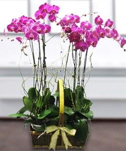 4 dallı mor orkide  Şanlıurfa cicek , cicekci