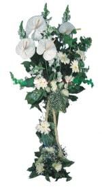 Şanlıurfa çiçek siparişi vermek  antoryumlarin büyüsü özel