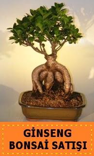 Ginseng bonsai satışı japon ağacı  Şanlıurfa çiçek , çiçekçi , çiçekçilik