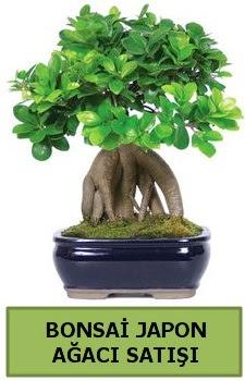 Bonsai japon ağacı satışı  Şanlıurfa kaliteli taze ve ucuz çiçekler