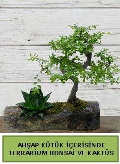 Ahşap kütük bonsai kaktüs teraryum  Şanlıurfa çiçek gönderme