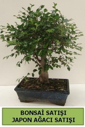 Minyatür bonsai japon ağacı satışı  Şanlıurfa hediye sevgilime hediye çiçek