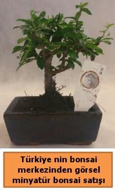 Japon ağacı bonsai satışı ithal görsel  Şanlıurfa çiçek online çiçek siparişi