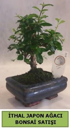 İthal japon ağacı bonsai bitkisi satışı  Şanlıurfa çiçek mağazası , çiçekçi adresleri