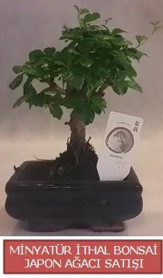 Küçük görsel bonsai japon ağacı bitkisi  Şanlıurfa güvenli kaliteli hızlı çiçek
