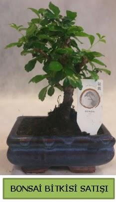 Bonsai ithal görsel minyatür japon ağacı  Şanlıurfa yurtiçi ve yurtdışı çiçek siparişi