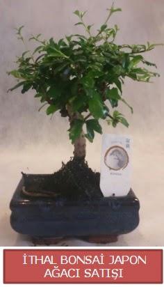 İthal küçük boy minyatür bonsai ağaç bitkisi  Şanlıurfa çiçek mağazası , çiçekçi adresleri
