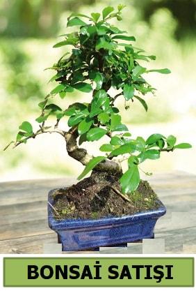 Çam bonsai japon ağacı satışı  Şanlıurfa kaliteli taze ve ucuz çiçekler